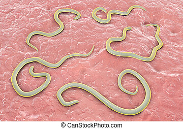 Helminths Toxocara canis dog roundworm, the cause of...