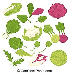 Lettuce salads leafy vegetables vector isolated icons set -...