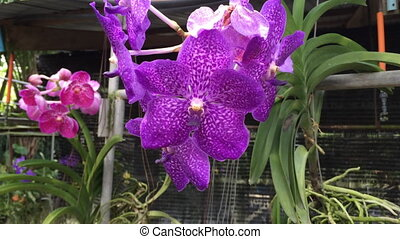Orchid plant on farm shot
