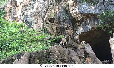 Monkeys on rocks at sunny day shot