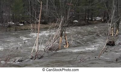 Flooding through fields and trees - Rushing water through...