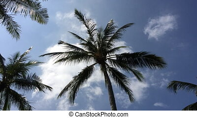 Palm tree slowmotion - Palm tree at sunny day slowmotion...