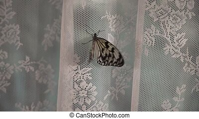Beautiful butterfly indoors at the evening