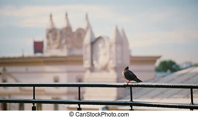 Birds sitting on a roof parapet in sunny day. View to the...