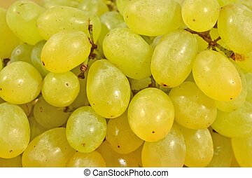 Green grapes close up as background