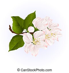 Apple blossom twig with leaves vector.eps - Apple blossom...