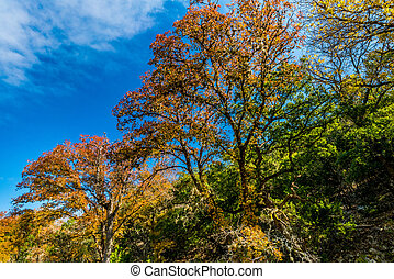 Fall Foliage at Lost Maples State Park in Texas. - A...