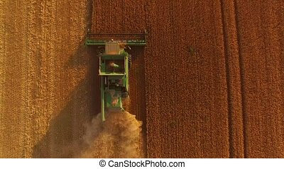 Combine with golden field. Top view of agricultural machine.