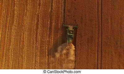 Field and combine, aerial view. Agricultural machine in...