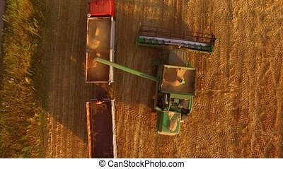 Combine unloads grain into truck. Top view of agricultural...