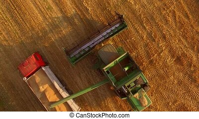 Combine and truck with grain. Agricultural machines, top...