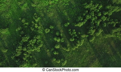 Flying over green woods - Aerial shot of green forest and...