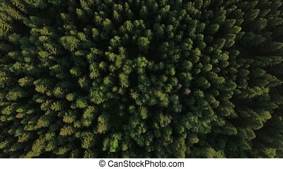 Flying over green forest and village near the road, Russia -...