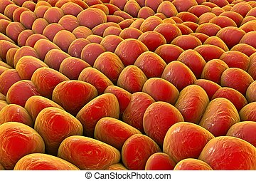 Layer of human cells - Layer of cells, human skin cells or...