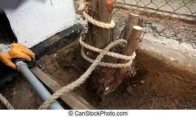 Tree Stump And Rope