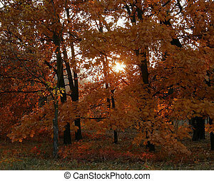 Autumn forest in a rays of sun