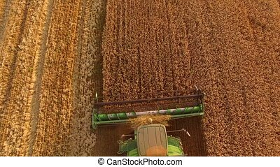 Combine harvester cutting wheat. Machine working in the...