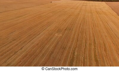 Wheat field, aerial view. Combine harvester in distance. The...
