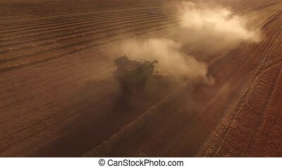 Wheat field, combines and dust. Machines gathering wheat...