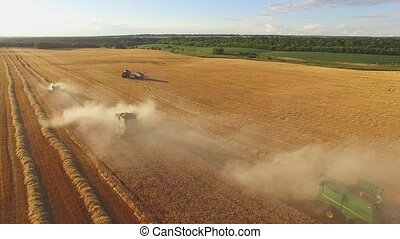 Field with trucks and combines. Machines gathering crops.