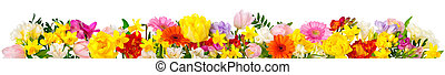 Colorful flowers on white in banner format