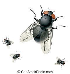 Housefly - Vector detailed illustration of a housefly