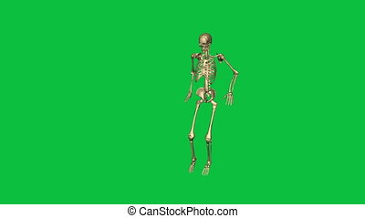 skeleton jump lead - separate on green screen - 3d animation...