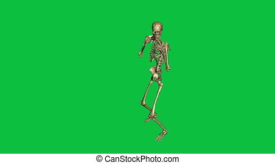 skeleton boxing  - separate on green screen