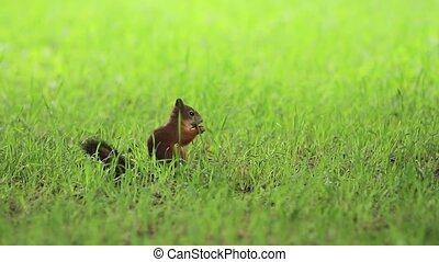Marten in grass at cloudy day
