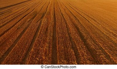 Golden field, aerial view. Big wheat field. The wealth of...