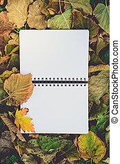 secos, escola, folhas, Outono, costas, leitura, livro, nostálgico, em branco, Educação, abertos, conceito