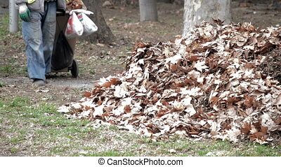 Garbage Man clean up autumn leaves and make pile of leaves