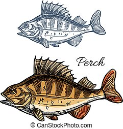 Perch or bass fish sketch for fishing sport design