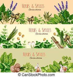 Herbs, spices and condiments cartoon banner set - Herbs,...