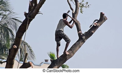 Man cutting a tree - KOLKATA, WEST BENGAL / INDIA - JANUARY...