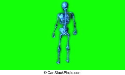 skeleton hologram - separated on green screen - animation of...