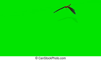 flying dragonfly isolated on green screen - 3d rendering...