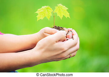 Adult and child holding little green plant in hands. Ecology...
