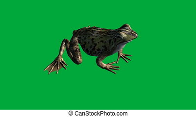 frog eat ,walk and jump - green screen - animation-frog eat...