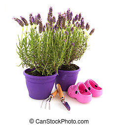 Lavender with garden tools - Lavender Stoechas plants with...