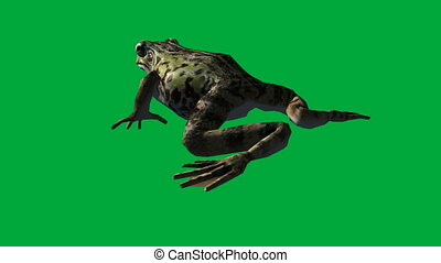 frog eat ,walk and jump - green screen