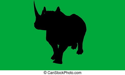 Rhino walks - green screen - 3d animation of Rhino walks -...