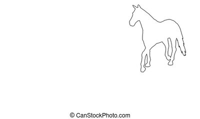Horse moving. On white screen