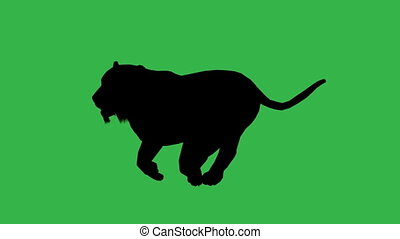 Panther moving. On green screen HD 2d line animation