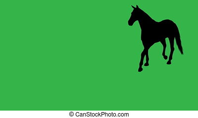 Horse moving. On green screen HD 2d silhouette animation...