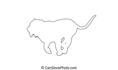 Panther moving. On white screen HD 2d line animation
