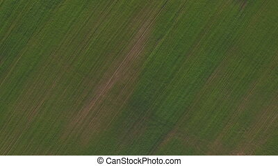 Aerial view of green field - Aerial shot of vast green field...