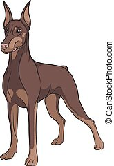 Color vector image of a Doberman. Isolated object on white.