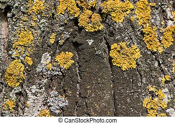 tree fungus, old tree