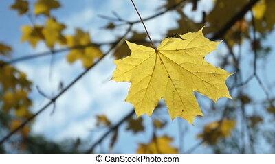 Auturm park trees city - Leaf fall in the autumn city park....